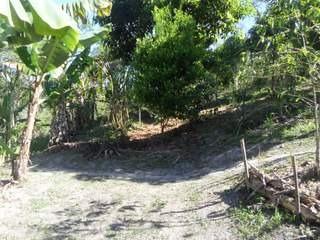 sitio rico em agua,sede/plantio/pomar/ ref: 03585