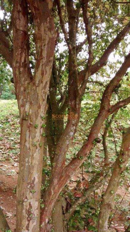 sítio rural à venda, itararé, embu-guaçu. - v2571