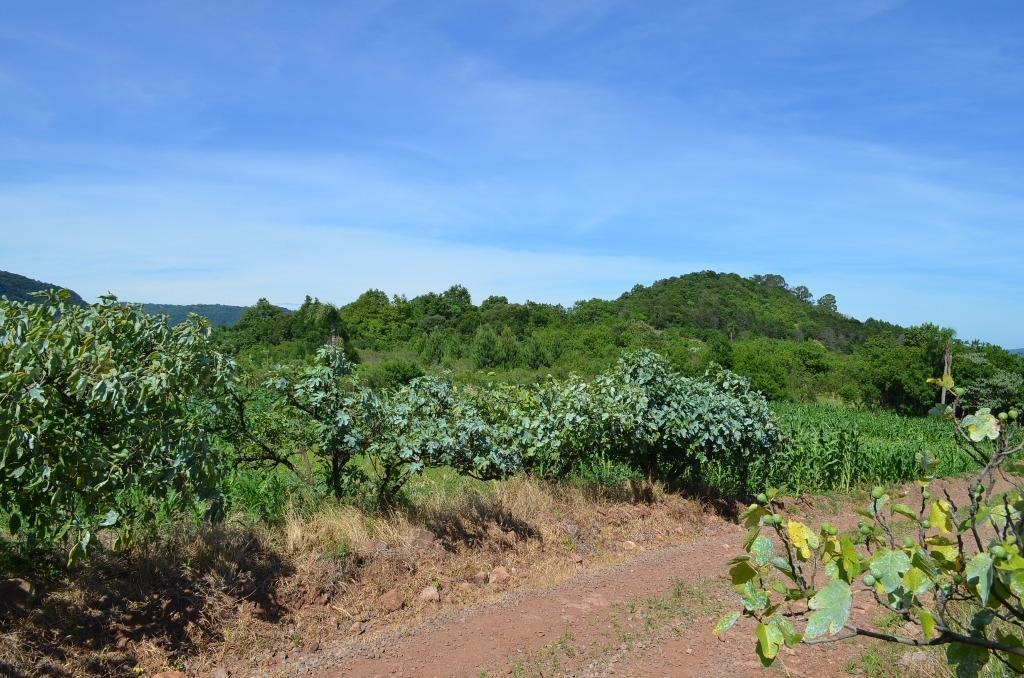 sítio à venda, 40000 m² por r$ 650.000,00 - linha bonita - gramado/rs - si0011