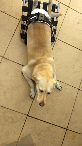 skate pet pars cães de 30 a 50kg