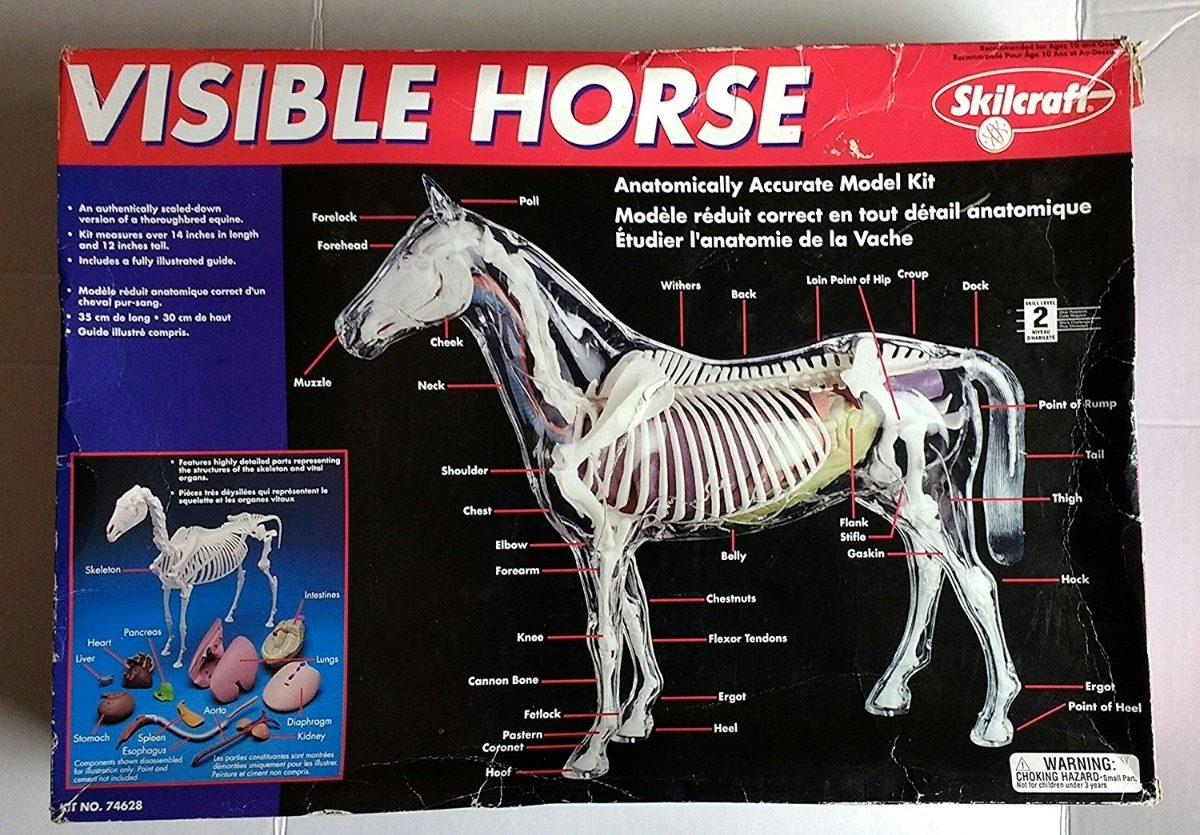 Skilcraft Caballo Modelo 3d 36 Cm Alto Anatomia Veterinaria ...