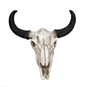 Skulls Dirigir Toro Cabeza Escultura Cuerno Largo Vaca Cráne