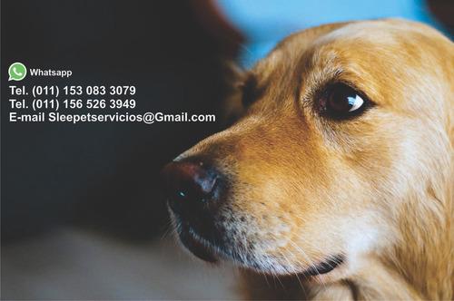 sleepet. servicio de cremación de mascotas.