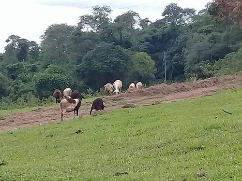 são paulo município de oportunidades -chalés - cristopher