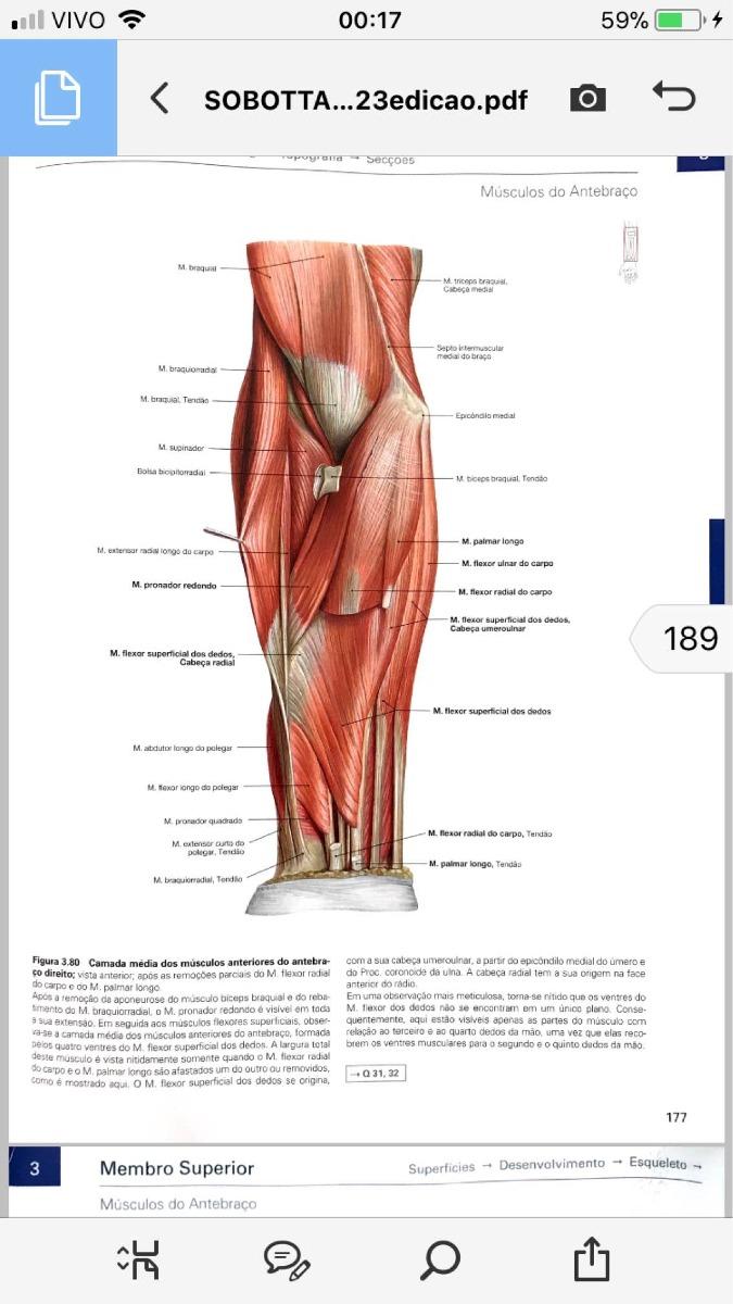 Nett Atlas Der Anatomie Netten Ideen - Anatomie Ideen - finotti.info