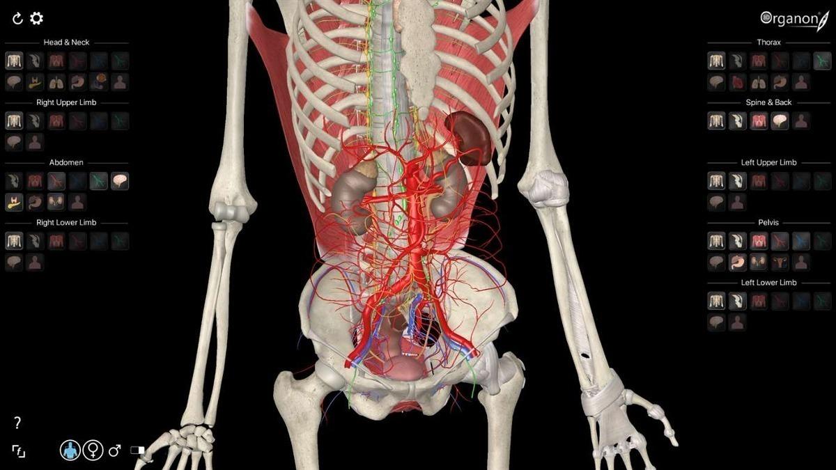 Encantador Software De Aprendizaje De La Anatomía Embellecimiento ...