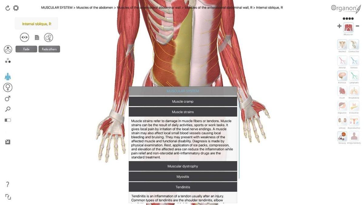 Contemporáneo Software De La Anatomía 3d Motivo - Anatomía de Las ...