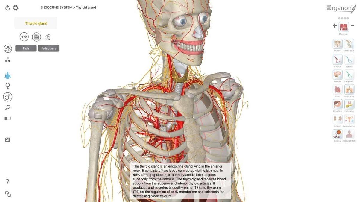 Famoso Cuerpo Visible Atlas 3d Anatomía Elaboración - Anatomía de ...