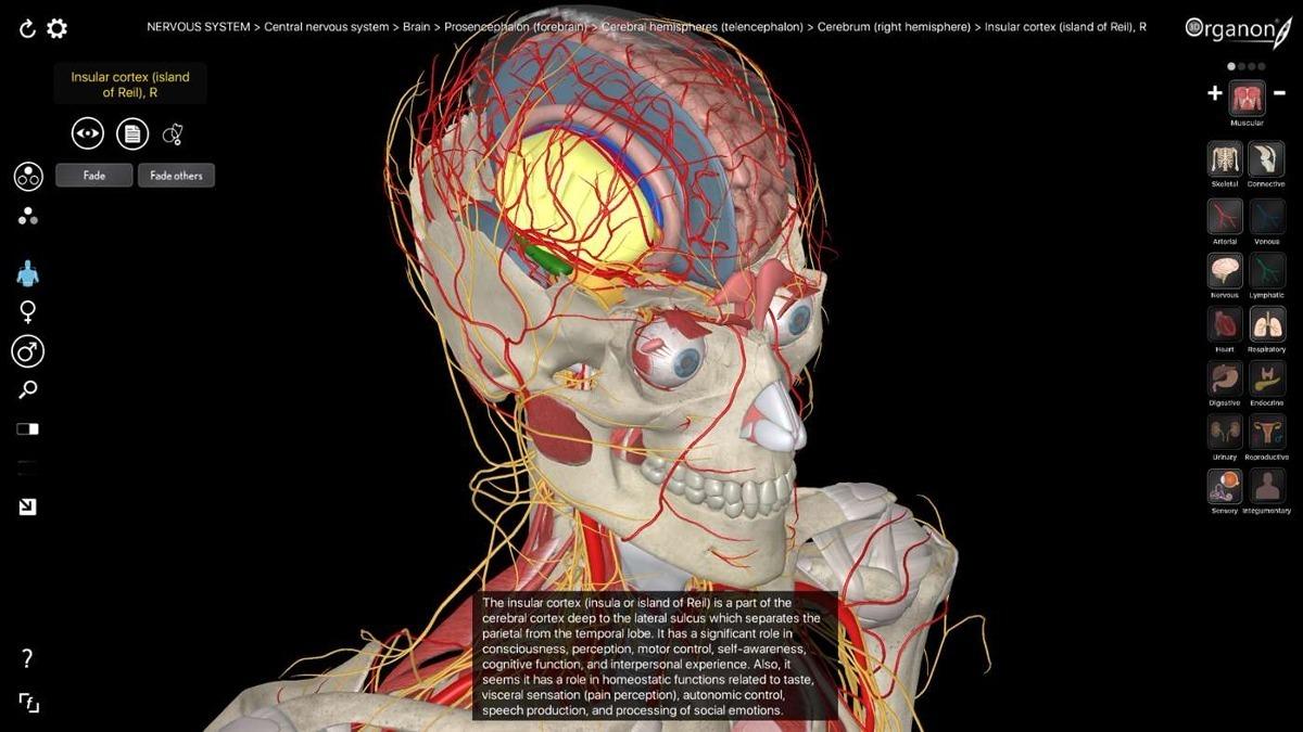 Increíble Human Anatomy Software Festooning - Anatomía de Las ...