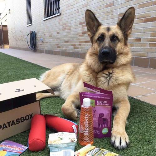 soluciones para mascotas - patasbox alimentos (perros/gatos)