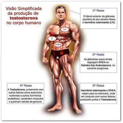 somatodrol - complexo ativador 180 cápsulas massa muscular