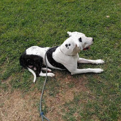 somos protseg k9 centro de formación canina