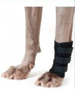 soporte de carpo muñequera para perros ortopedia canina
