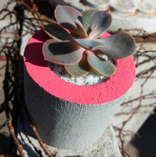 souvenir maceta con cactus o suculenta deco 8x8 cemento