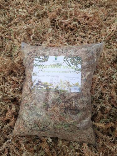 sphagnum moss, musgo chilote,pon pon  especial para kokedama