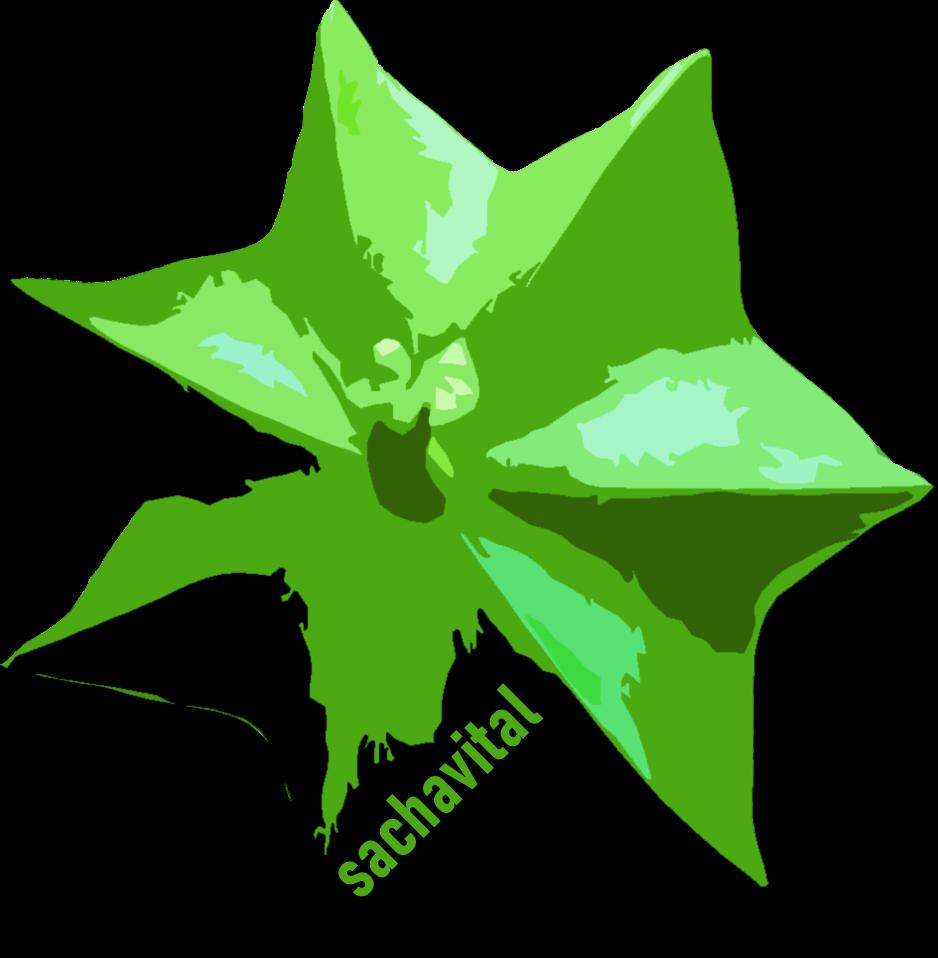Sachavital