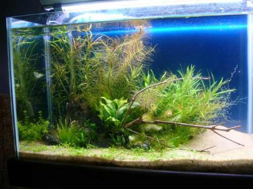 substrato aquapaisagismo para aquários plantados