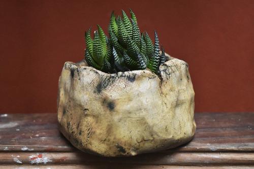 suculenta haworthia coarctata en maceta cerámica artesanal