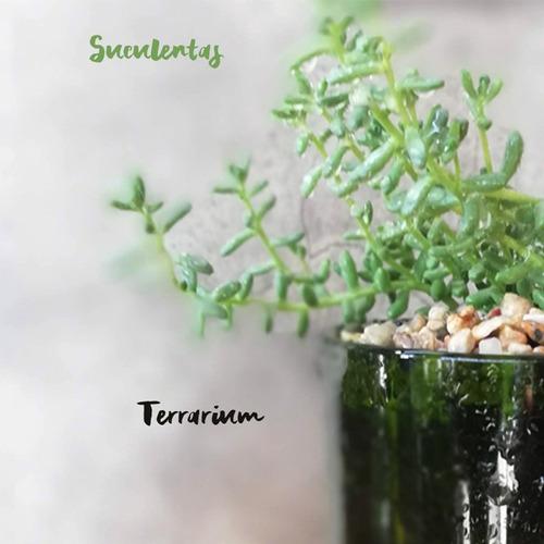 suculenta little terrario 10, maceta de vidrio