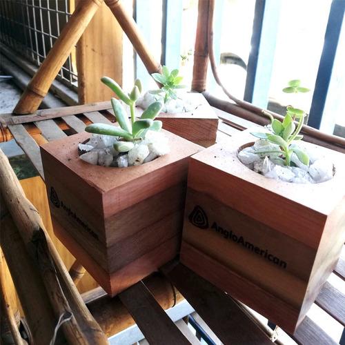 suculentas 4m, maceta de madera