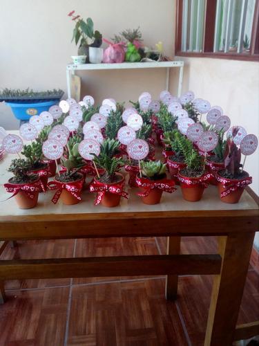 suculentas, cactus ¿, kokedamas y todo ornamentales en gral