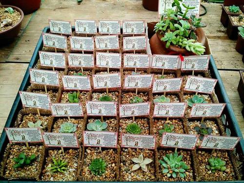 suculentas coleccion, arpillera y cinta + tarjeta