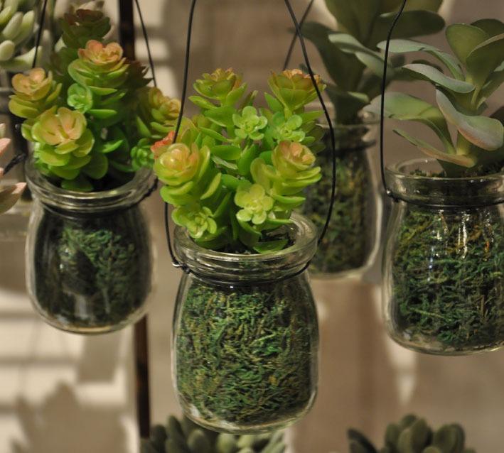 Plantas crasas colgantes decogarden plantas suculentas - Plantas suculentas colgantes ...