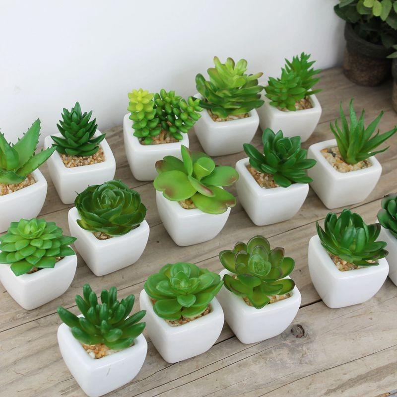 Suculentas mini cactos 30 unidades de semente frete for Plantas de interior decorativas