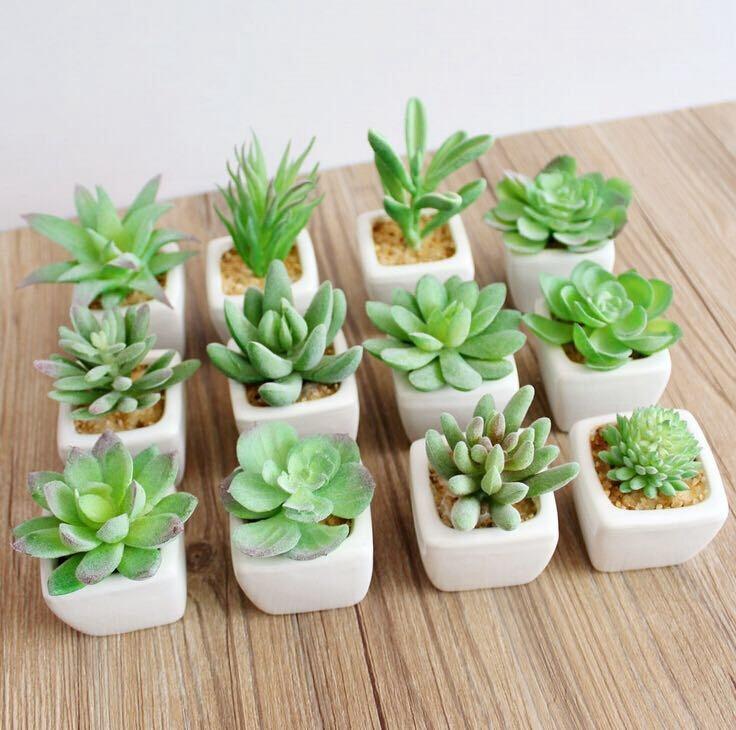 Suculentas y c ctus en medell n en mercado libre for Curso cactus y suculentas