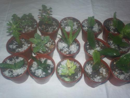 suculentas y cactus  souvenir