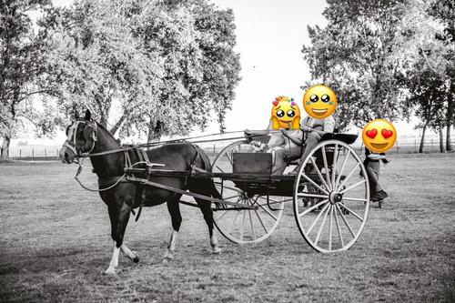 sulky, caballo, rienda