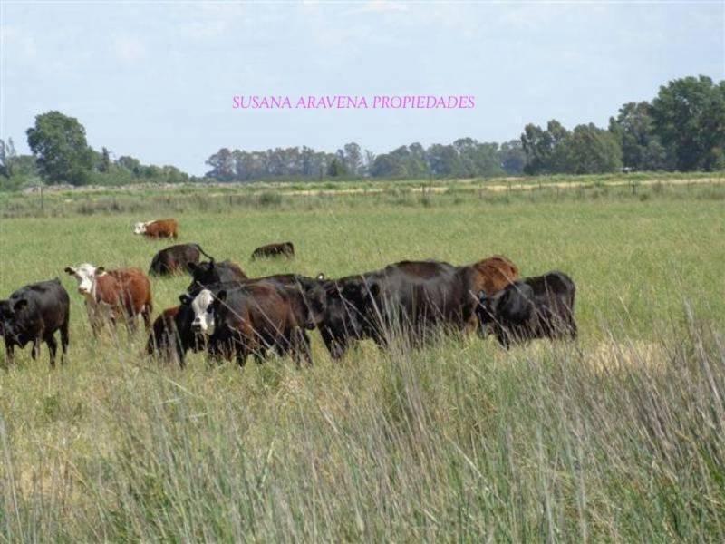 susana aravena propiedades ds, vende excelente campo ganadero la pampa