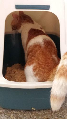 sustituto de la arena para gatos lecho