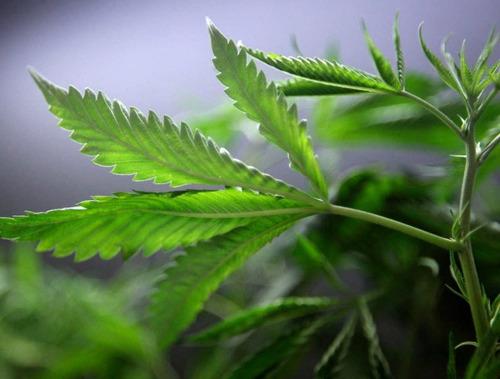 sustrato orgánico verde premium peat moss perlita coco 50lt
