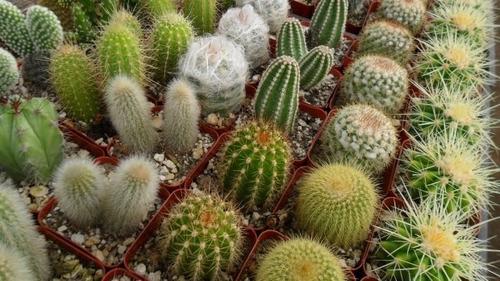 sustrato para cactus y suculentas bulto 25 kilos cultivo