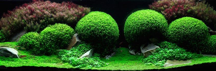 Sustrato para plantas de acuario acuarios plantados bs for Plantas de acuario