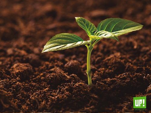sustrato profesional eden 25lts tierra fértil cultivo 2u