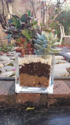 suvenir cactus y suculentas fanal de vidrio bodas y eventos