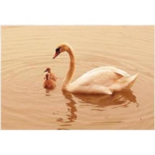 t30-029 familia de cisnes rompecabezas 300 piezas tomax