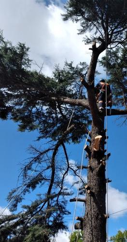 tala árboles poda
