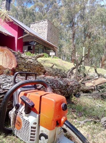 tala, extracción de árboles/poda. altura. zona oeste !