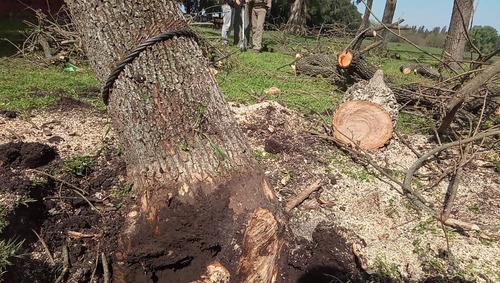 tala, extracción de árboles/poda en altura. toda zona norte!
