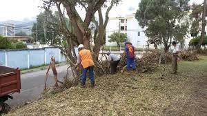 talado de árboles, podas limpiezay  nivelacion de terrenos