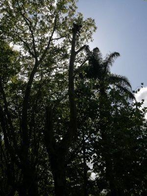 talas y podas de árboles pequeños y gran porte
