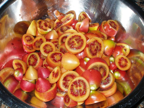 tamarillo gigante tomate de árvore sementes fruta para mudas