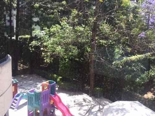 tamarindos - bosques de las lomas