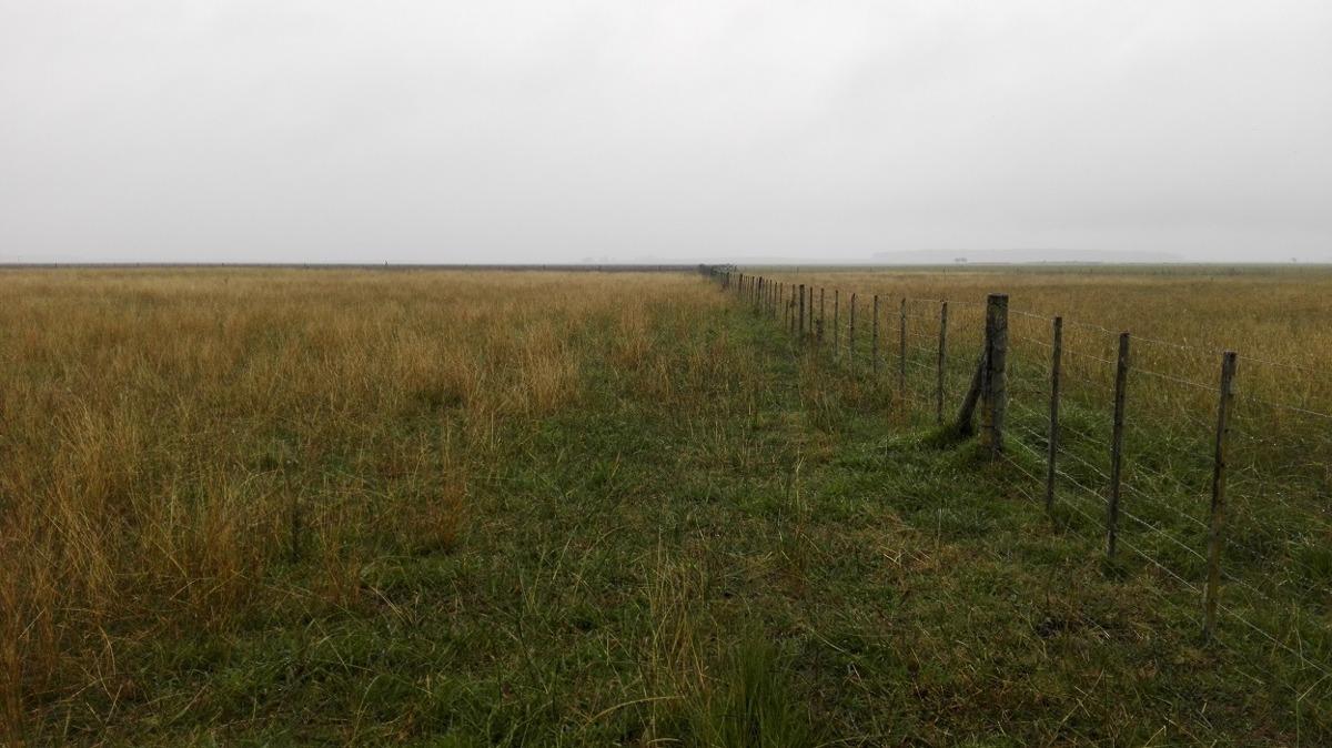 tandil 770 hectareas