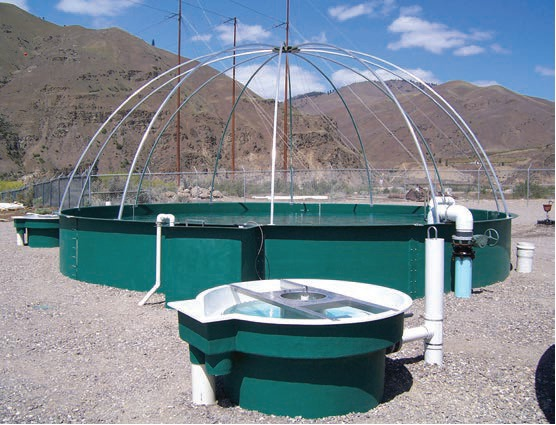 Tanques piscicultura s r a biofloc tilapia trucha camaron for Piscicultura en tanques plasticos