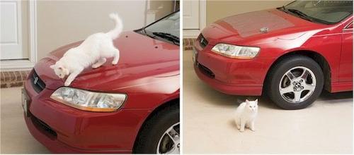 tapete de entrenamiento gato petsafe interior profesional