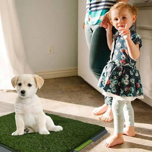 tapete entrenador perro